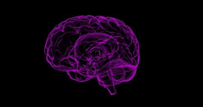 brain, human anatomy, anatomy