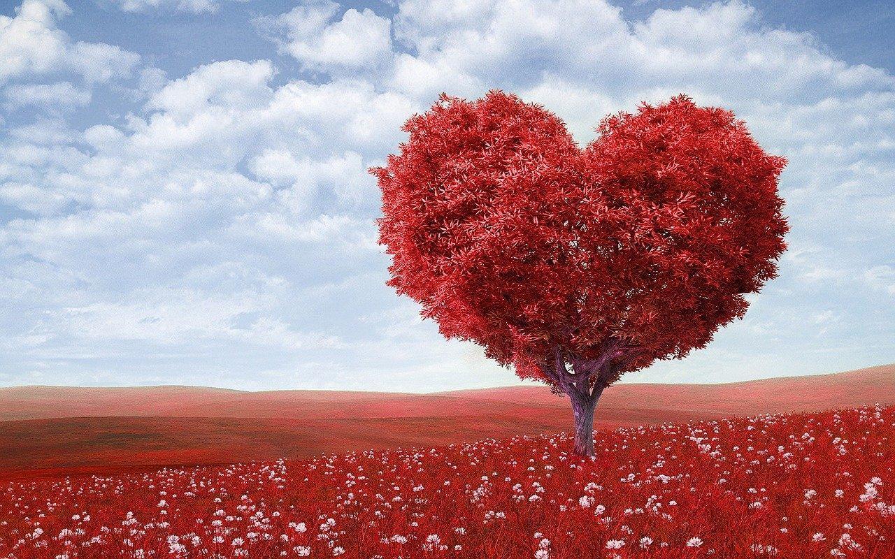 Herzinsuffizienz, Herzschwäche, Gefäßverkalkung
