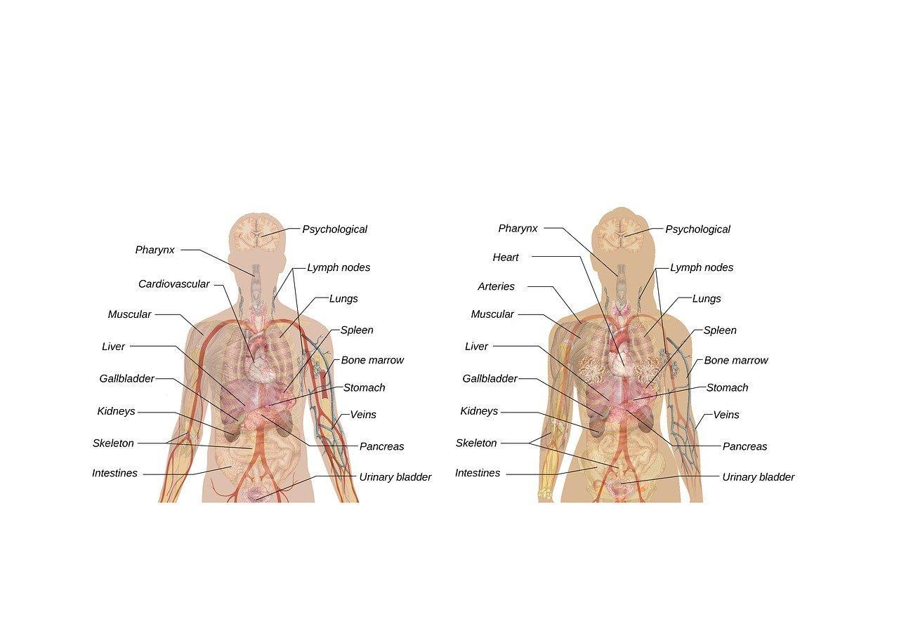 Künstliche Lunge