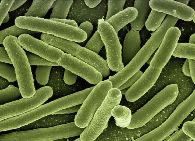 Keime, Bakterien