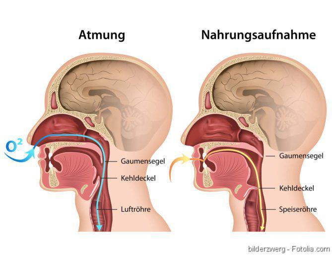 Atemwegs-Allergien, Atmung, Atemwege, Allergien, Asthma, Atemwegserkrankungen