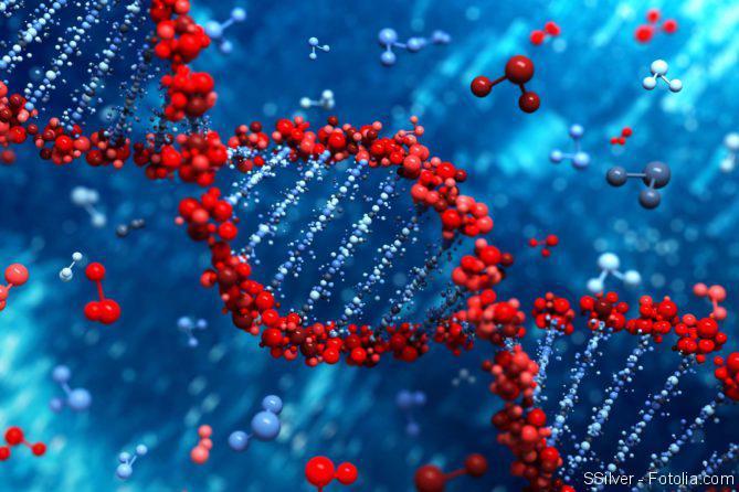 Stamzelle, DNA-Strang