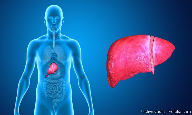Fettleber, Was hält die Leber gesund, Infektionen bei Organempfängern