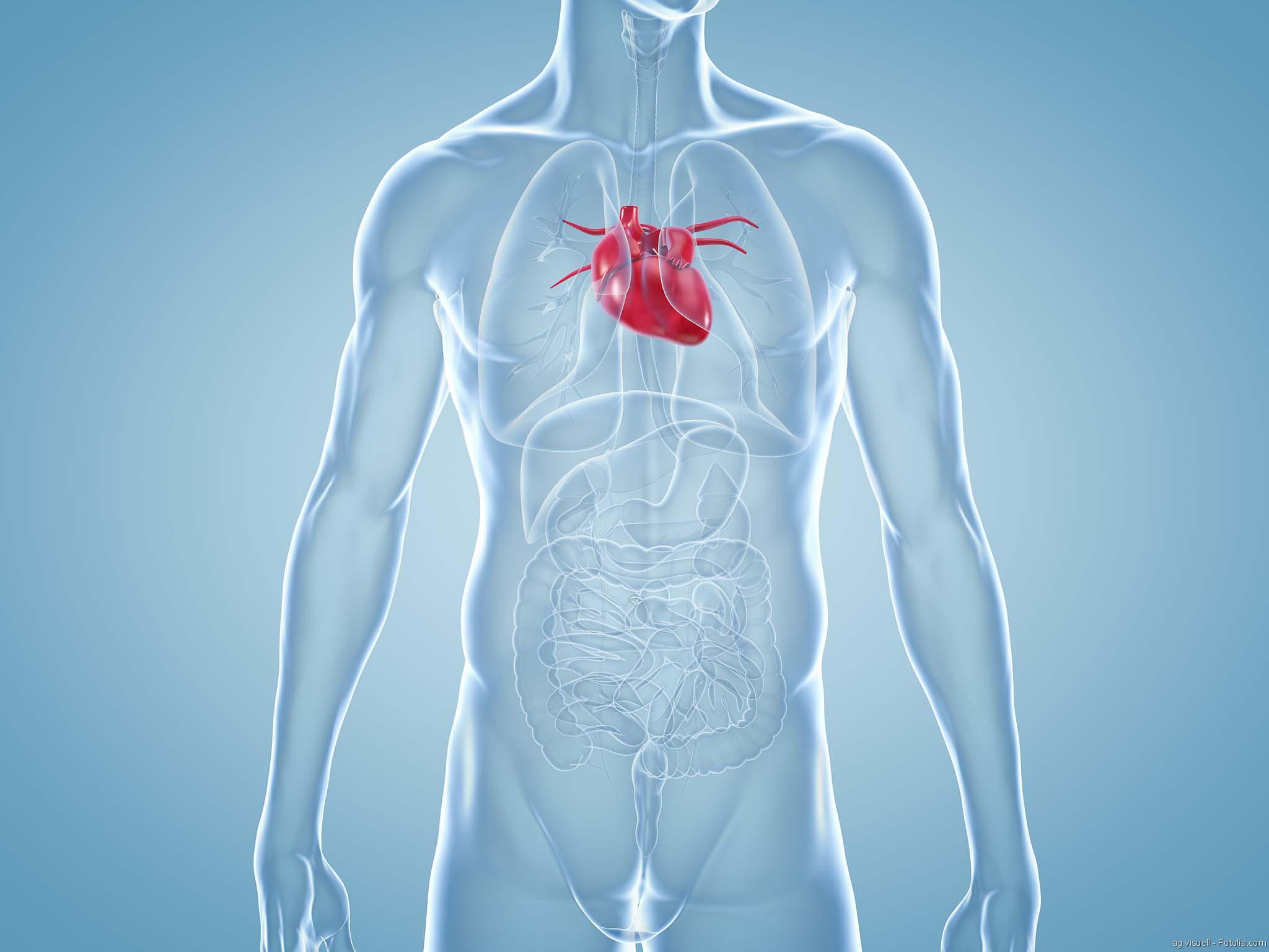 Erfolge mit Herzgewebe aus dem Labor - Arzt Aspekte