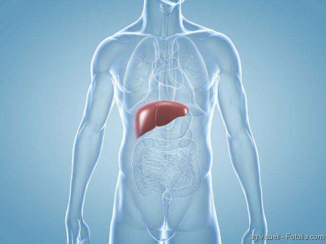 Organtransplantationen, Lebertransplantationen, Leber, Leberkrebs