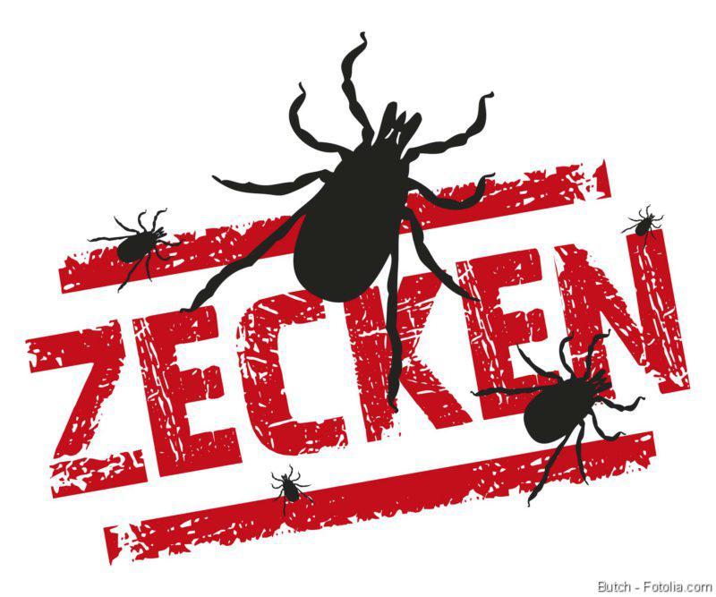 Zecken, FSME